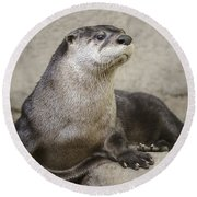 Otter North American  Round Beach Towel