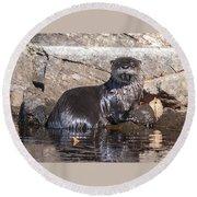 Otter Posing Round Beach Towel
