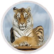 Out Of Africa Tiger 3 Round Beach Towel