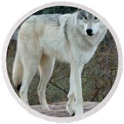 Out Of Africa Wolf  Round Beach Towel
