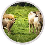 Out To Pasture Round Beach Towel