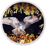 Owl About To Land Round Beach Towel by Manfred Danegger