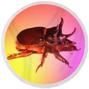 Ox Beetle In Color Round Beach Towel