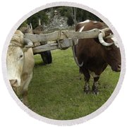 Oxen Round Beach Towel