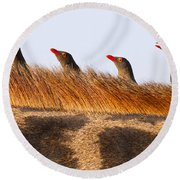 Oxpeckers Round Beach Towel