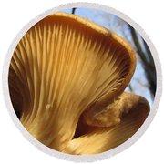 Oyster Mushroom Macro Round Beach Towel
