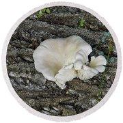 Oyster Mushroom Round Beach Towel