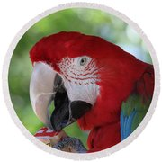 P Is For Parrot Round Beach Towel