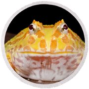 Pac Man Frog Ceratophrys On A Rock Round Beach Towel