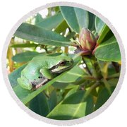 Pacific Chorus Frog On A Rhodo  Round Beach Towel