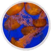 Pacific Sea Nettle Cluster 2 Round Beach Towel