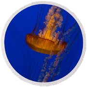 Pacific Sea Nettles In A Row Round Beach Towel