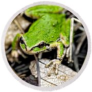 Pacific Tree Frog 2a Round Beach Towel