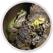 Pacific Treefrog Round Beach Towel