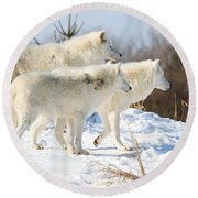 Pack Of Arctic Wolves Round Beach Towel
