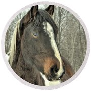 Paint Horse In Winter Round Beach Towel