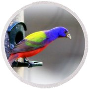 Painted Bunting - Img 9755-004 Round Beach Towel
