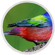 Painted Bunting Passerina Ciris Round Beach Towel