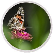 Painted Lady Butterfly At Rest Round Beach Towel by Christina Rollo