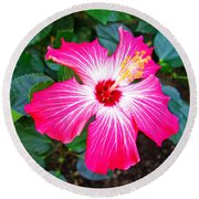 'painted Lady' Hibiscus Round Beach Towel