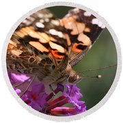 Painted Lady On Butterfly Bush Round Beach Towel by William Selander