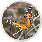 Painted Lady Square Round Beach Towel