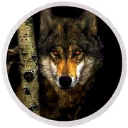 Painting ... Wolf In Aspen Grove Round Beach Towel