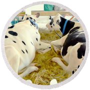 Pair Of Black And White Cows 3 Round Beach Towel