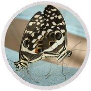 Pair Of Citrus Swallowtail Butterflies  Round Beach Towel