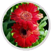 Pair Of Red Gerber Daisy Flowers With Ladybug Round Beach Towel