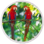 Pair Of Scarlet Macaws Round Beach Towel