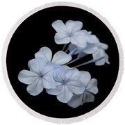 Pale Blue Plumbago Isolated On Black Background  Round Beach Towel