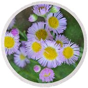 Pale Pink Fleabane Blooms With Decorations Round Beach Towel