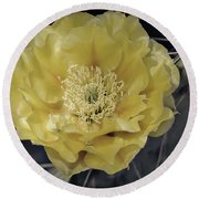 Pale Yellow Prickly Pear Bloom  Round Beach Towel