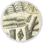 Paleozoic Flora, Calamites, Illustration Round Beach Towel