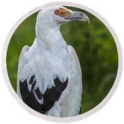 Palm-nut Vulture 2 Round Beach Towel