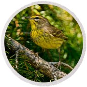 Palm Warbler Pictures 38 Round Beach Towel