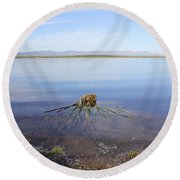 Palm Water Round Beach Towel