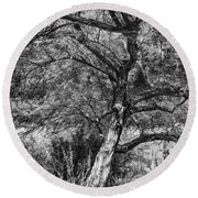 Palo Verde In Black And White Round Beach Towel