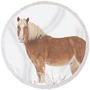 Palomino Horse In The Snow Round Beach Towel
