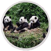 Pandas In China Round Beach Towel