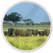 Panorama African Elephant Herd Endangered Species Tanzania Round Beach Towel