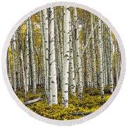 Panoramic Birch Tree Forest Round Beach Towel