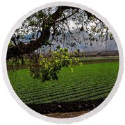 Panoramic Of Winter Lettuce Round Beach Towel by Robert Bales