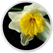 Paper White Daffodil Round Beach Towel