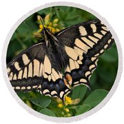 Papilio Machaon Butterfly Sitting On The Lucerne Plant Round Beach Towel