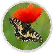 Papilio Machaon Butterfly Sitting On A Red Poppy Round Beach Towel