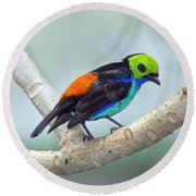 Paradise Tanager Round Beach Towel
