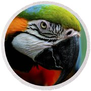 Parrot 13 Round Beach Towel