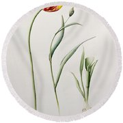 Parrot Tulip Round Beach Towel by Iona Hordern